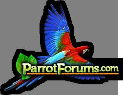 Parrot Forum - Parrot Owner's Community